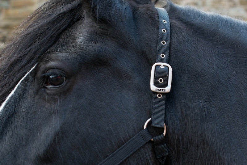 Epic® Classic Adjustable Head Collar