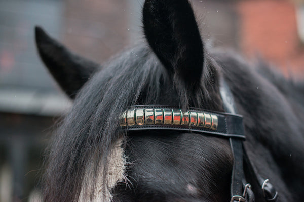 Epic® Classic Clincher Browband