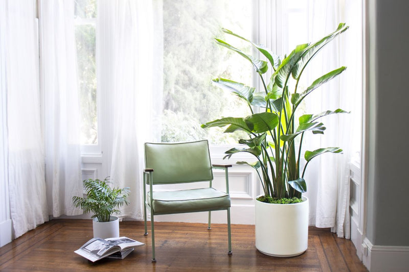 Purify your Space with Plants