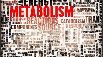 Age and Metabolism: What You Need to Know