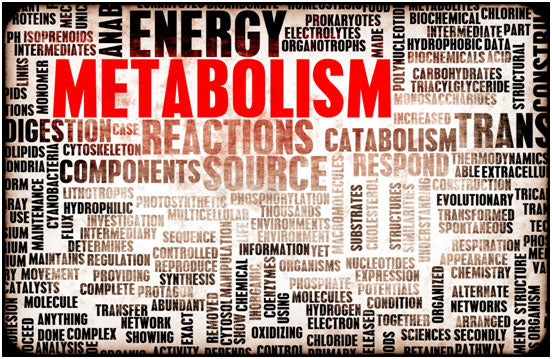 Metabolism and Age: What You Need to Know
