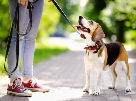 No Summer or Winter when it Comes to Dog Walks