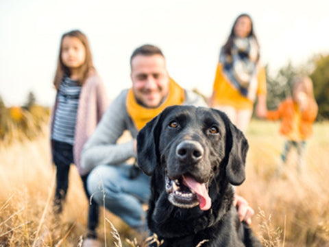 7 Problems Only Dog Owners Will Relate To!