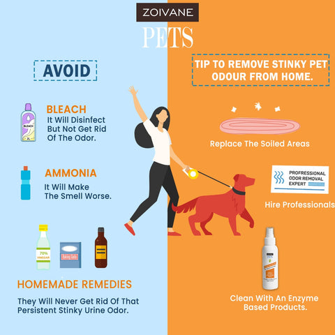 Eradicating Your Pet's Smell from Your Home