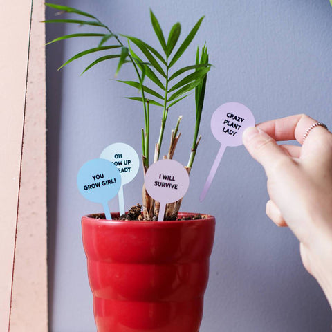 Set Of Six Fun Mini House Plant Stakes