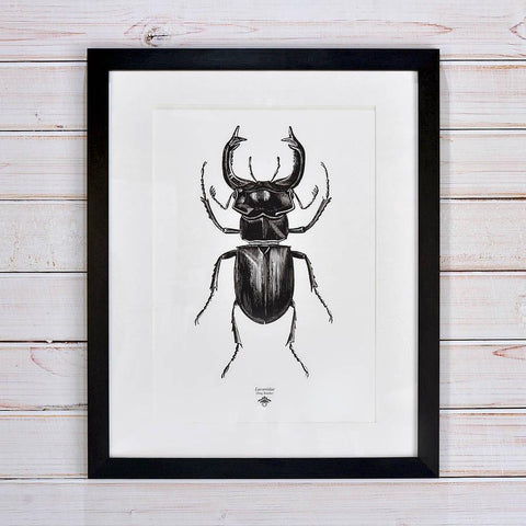 'Vintage Beetle Insect Illustration' Print - Oakdene Designs - 1