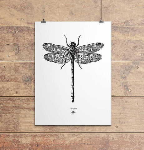 'Vintage Dragonfly Illustration' Print - Oakdene Designs - 1