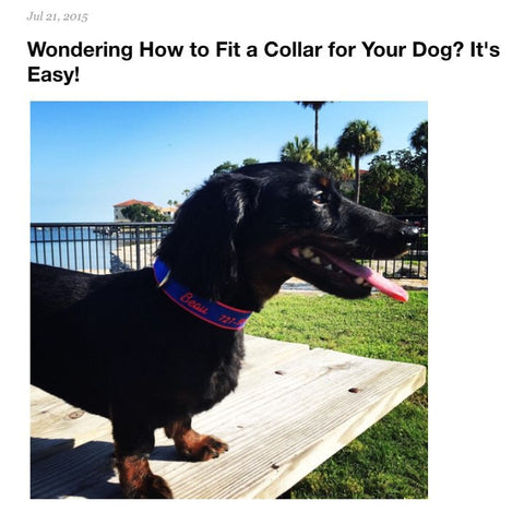 Wondering How to Fit a Collar for Your Dog?  It's Easy!