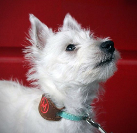 Celebrate Pet Identification and Dog Safety Month - Personalized Dog Collars - BeauJax Boutique