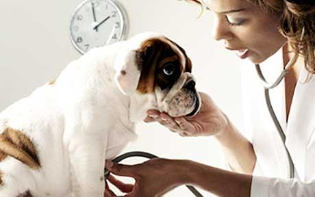 Let's Go to the Vet - How to Make Your Dog's Next Visit Pleasant