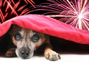 Fireworks Can Be Scary! Help Your Dog Feel Secure This Independence Day