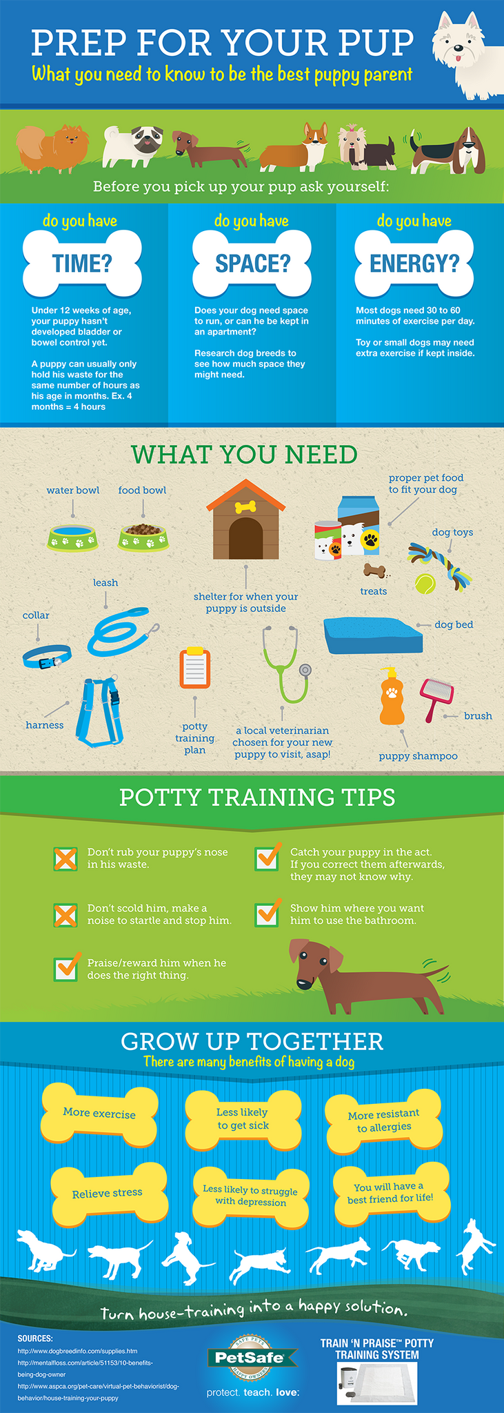Prep For Your Pup