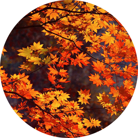 Autumnal Leaves Equinox