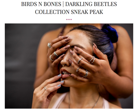 The Walrus Room Blog Birds N Bones