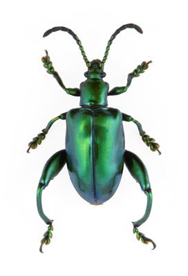 evolution store green frog beetle