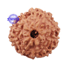 Load image into Gallery viewer, 10 Mukhi Rudraksha from Indonesia - Bead No. 207