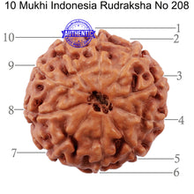 Load image into Gallery viewer, 10 Mukhi Rudraksha from Indonesia - Bead No. 208