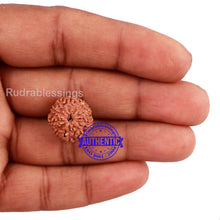 Load image into Gallery viewer, 10 Mukhi Rudraksha from Indonesia - Bead No. 176