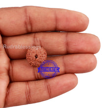 Load image into Gallery viewer, 10 Mukhi Rudraksha from Indonesia - Bead No. 178