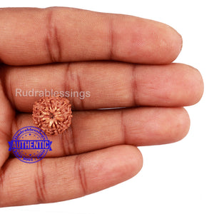 10 Mukhi Rudraksha from Indonesia - Bead No. 181