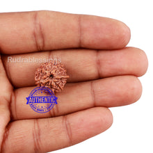 Load image into Gallery viewer, 10 Mukhi Indonesian Ganesh Rudraksha - Bead No. 10