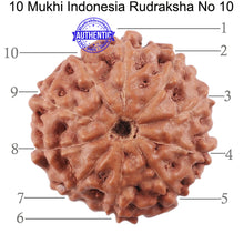 Load image into Gallery viewer, 10 Mukhi Rudraksha from Indonesia - Bead No. 10