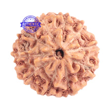 Load image into Gallery viewer, 10 Mukhi Rudraksha from Indonesia - Bead No. 110