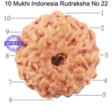 Load image into Gallery viewer, 10 Mukhi Rudraksha from Indonesia - Bead No. 22