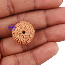 Load image into Gallery viewer, 10 Mukhi Rudraksha from Indonesia - Bead No. 3