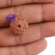 Load image into Gallery viewer, 10 Mukhi Rudraksha from Indonesia - Bead No. 55