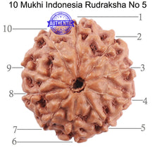 Load image into Gallery viewer, 10 Mukhi Rudraksha from Indonesia - Bead No. 5