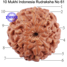 Load image into Gallery viewer, 10 Mukhi Rudraksha from Indonesia - Bead No. 61