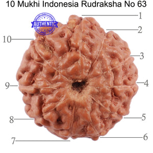 10 Mukhi Rudraksha from Indonesia - Bead No. 63