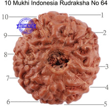 Load image into Gallery viewer, 10 Mukhi Rudraksha from Indonesia - Bead No. 64