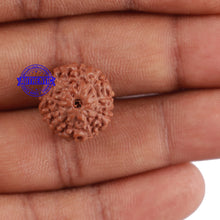 Load image into Gallery viewer, 10 Mukhi Rudraksha from Indonesia - Bead No. 66