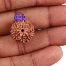 Load image into Gallery viewer, 10 Mukhi Rudraksha from Indonesia - Bead No. 6