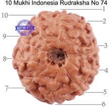 Load image into Gallery viewer, 10 Mukhi Rudraksha from Indonesia - Bead No. 74