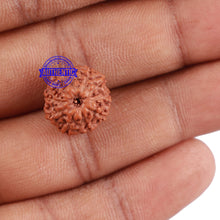 Load image into Gallery viewer, 10 Mukhi Rudraksha from Indonesia - Bead No. 77
