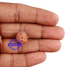 Load image into Gallery viewer, 10 Mukhi Indonesian Ganesh Rudraksha - Bead No. 7