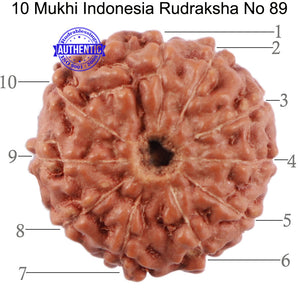 10 Mukhi Rudraksha from Indonesia - Bead No. 89