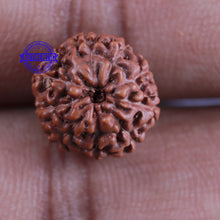 Load image into Gallery viewer, 10 Mukhi Rudraksha from Indonesia - Bead No. 92