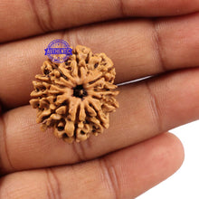 Load image into Gallery viewer, 10 Mukhi Nepalese Rudraksha - Bead No 189