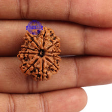Load image into Gallery viewer, 10 Mukhi Nepalese Rudraksha - Bead No 191