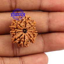 Load image into Gallery viewer, 10 Mukhi Nepalese Rudraksha - Bead No 193