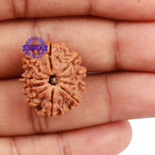 Load image into Gallery viewer, 10 Mukhi Nepalese Rudraksha - Bead No. 3