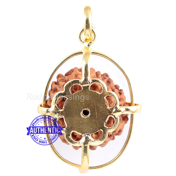 10 Mukhi Rudraksha from Indonesia - Bead No. 134 (Gold Plated Bracket)