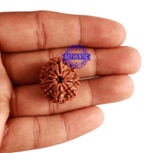 Load image into Gallery viewer, 10 Mukhi Nepalese Rudraksha - Bead No. 217