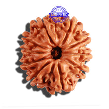 Load image into Gallery viewer, 10 Mukhi Nepalese Rudraksha - Bead No. 227
