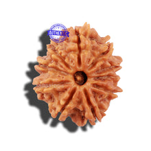 Load image into Gallery viewer, 10 Mukhi Nepalese Rudraksha - Bead No 25