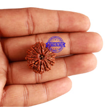 Load image into Gallery viewer, 10 Mukhi Nepalese Rudraksha - Bead No. 254